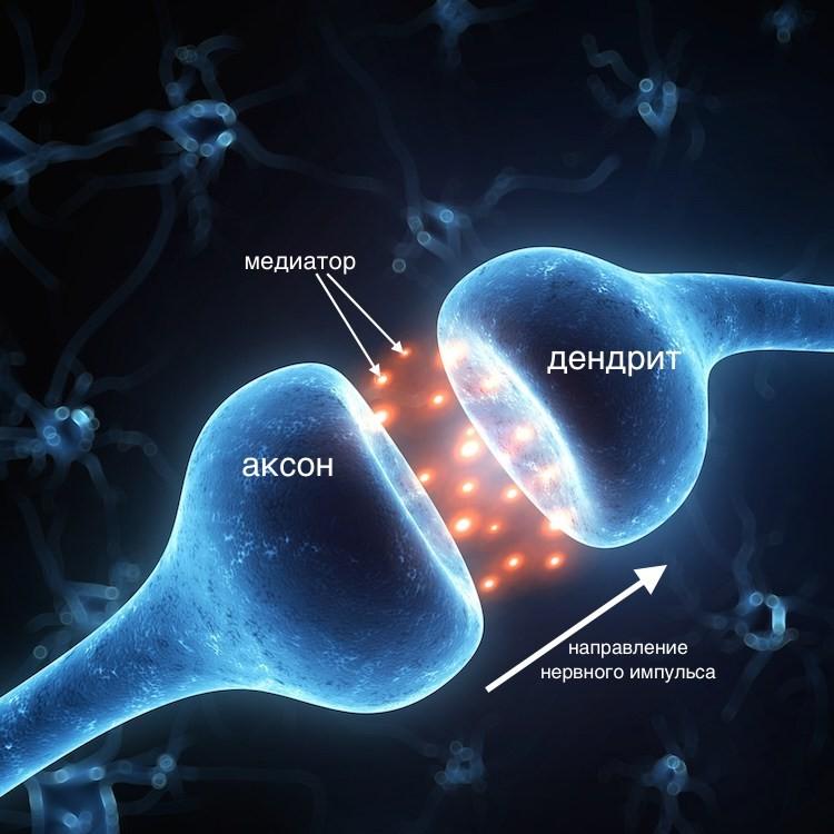Нейромедиаторы. Что это? И как они на нас влияют?